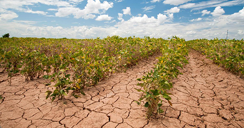 How Climate Change Impacts Local Farms