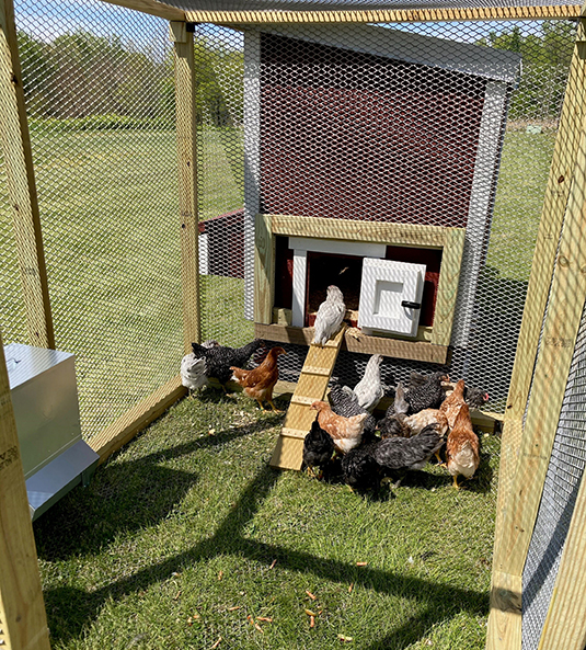 OHS Adds Chicken Coop in Honor of Local Farmer