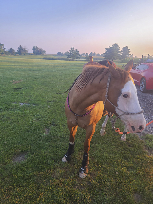 Missing Horse Found